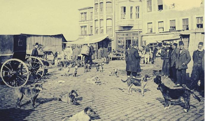 İstanbul 1914Hayırsızada sendromundan sonra sokak köpeklerine sevgi ile bakılm