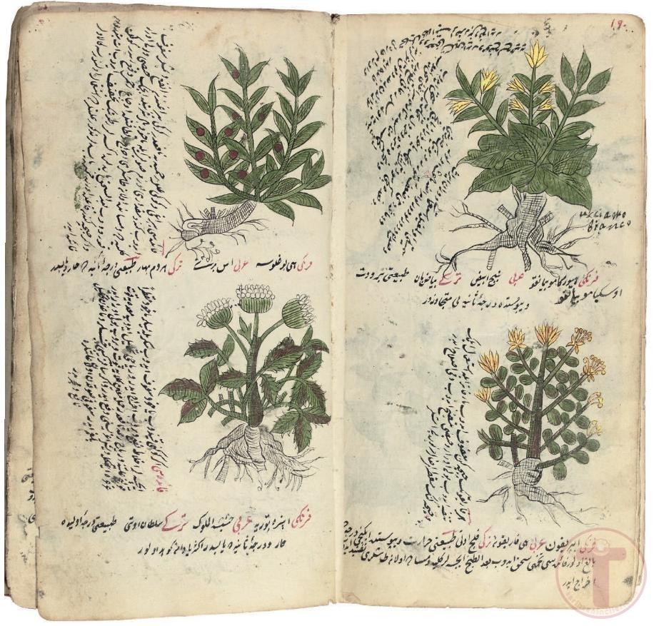 Bitkisel Tıp İnceleme Eseri