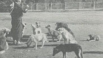 Köpekleri besleyen bir Osmanlı